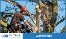 wycinka-drzew-katowice-kastelnik-1