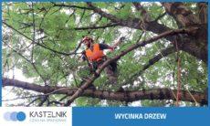 wycinka drzew katowice kastelnik