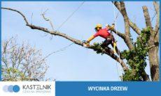 wycinka-drzew-katowice-kastelnik-3