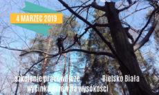 wycinanie-drzew-2